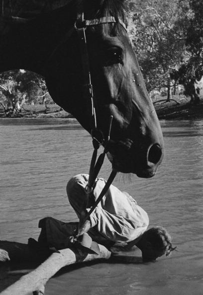 Thirsty Stockman fine art photography