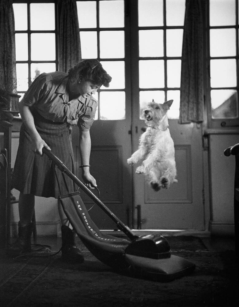 Vacuum Dog Jump fine art photography