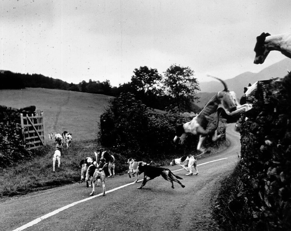 Hound Trailing fine art photography