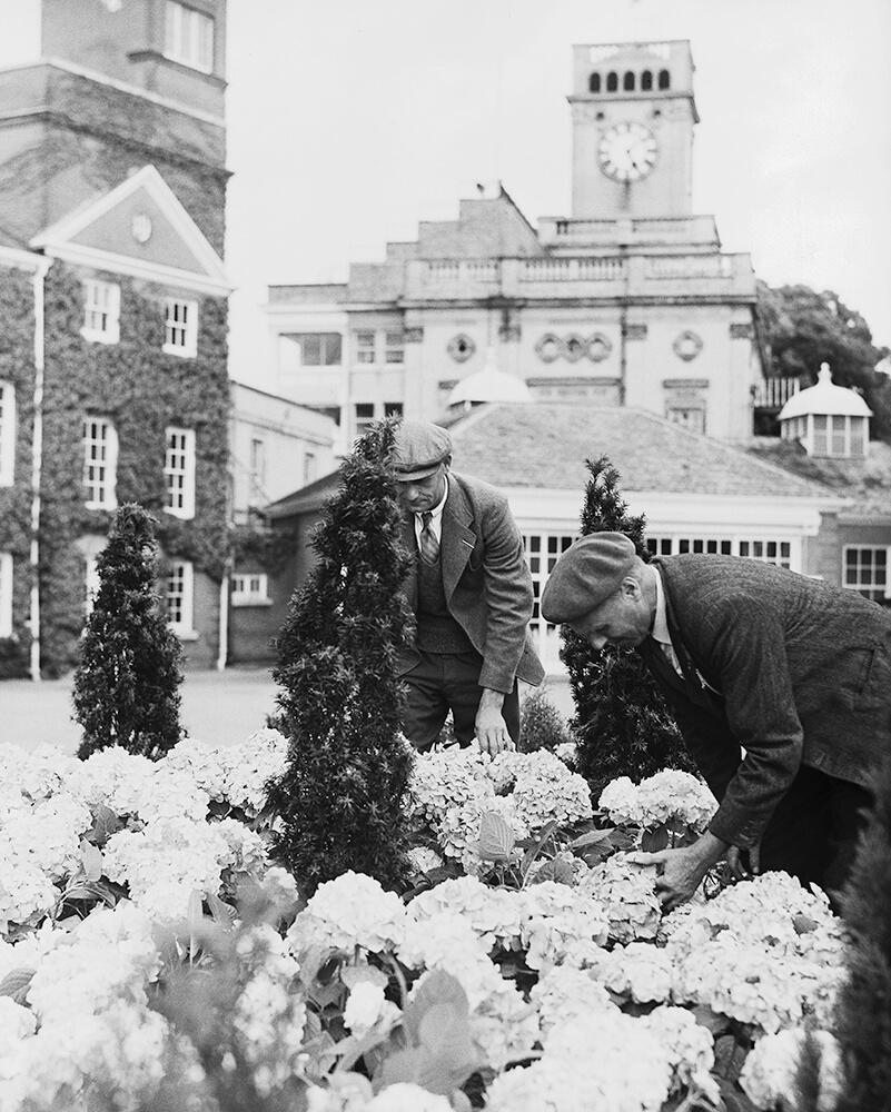 Hydrangeas At Ascot fine art photography