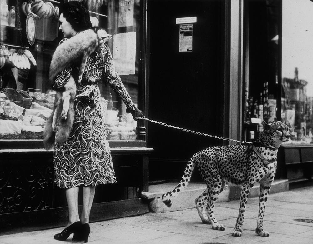 Cheetah Who Shops fine art photography