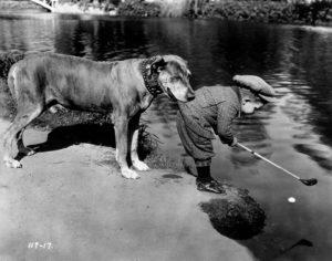 Helpful Dog