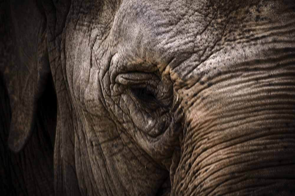 Elephant eye fine art photography