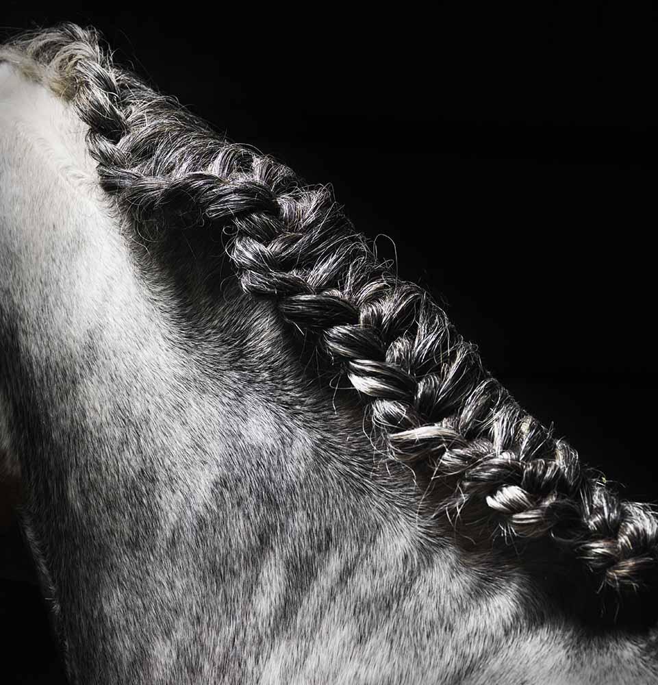 Braided mane of grey horse fine art photography