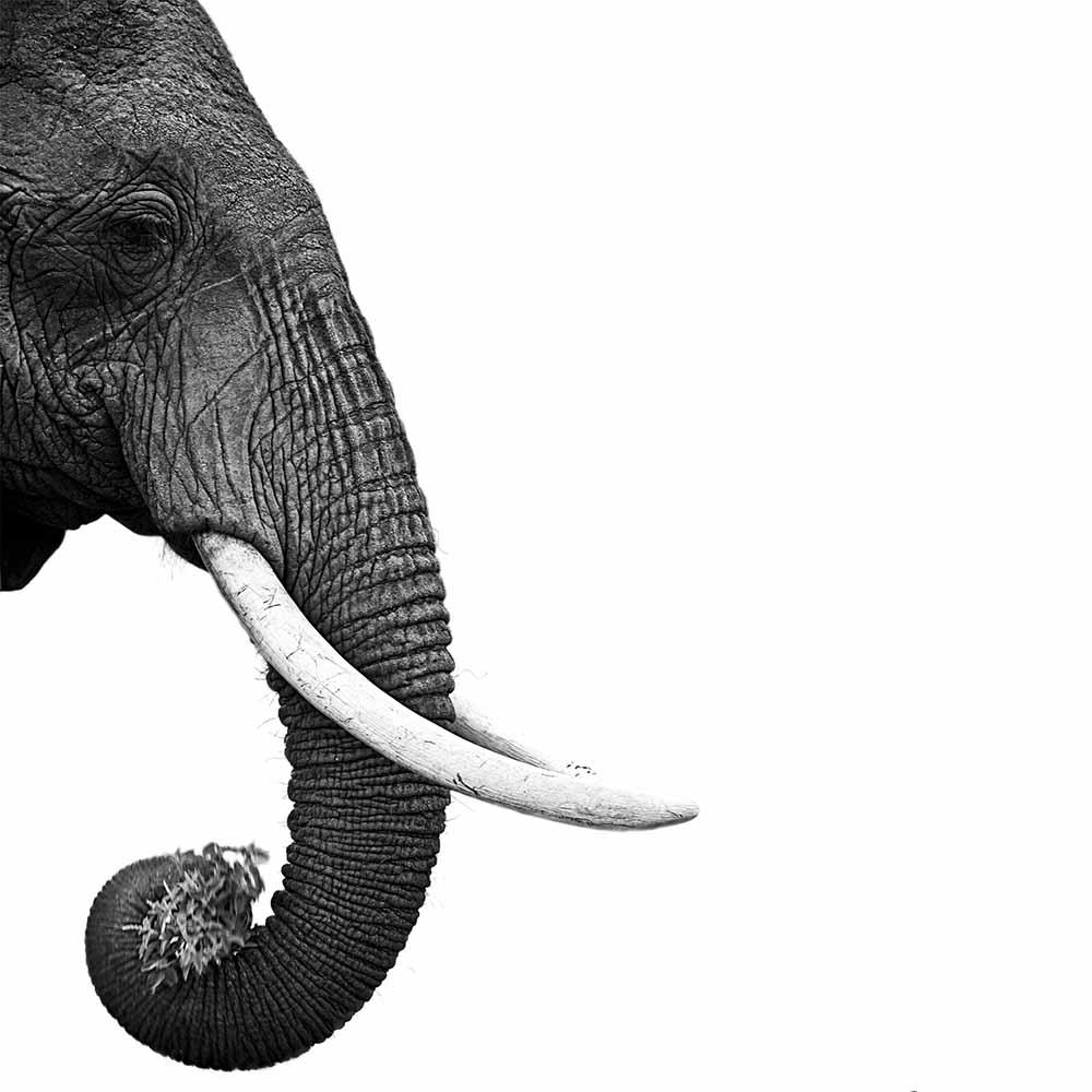 Elephant fine art photography