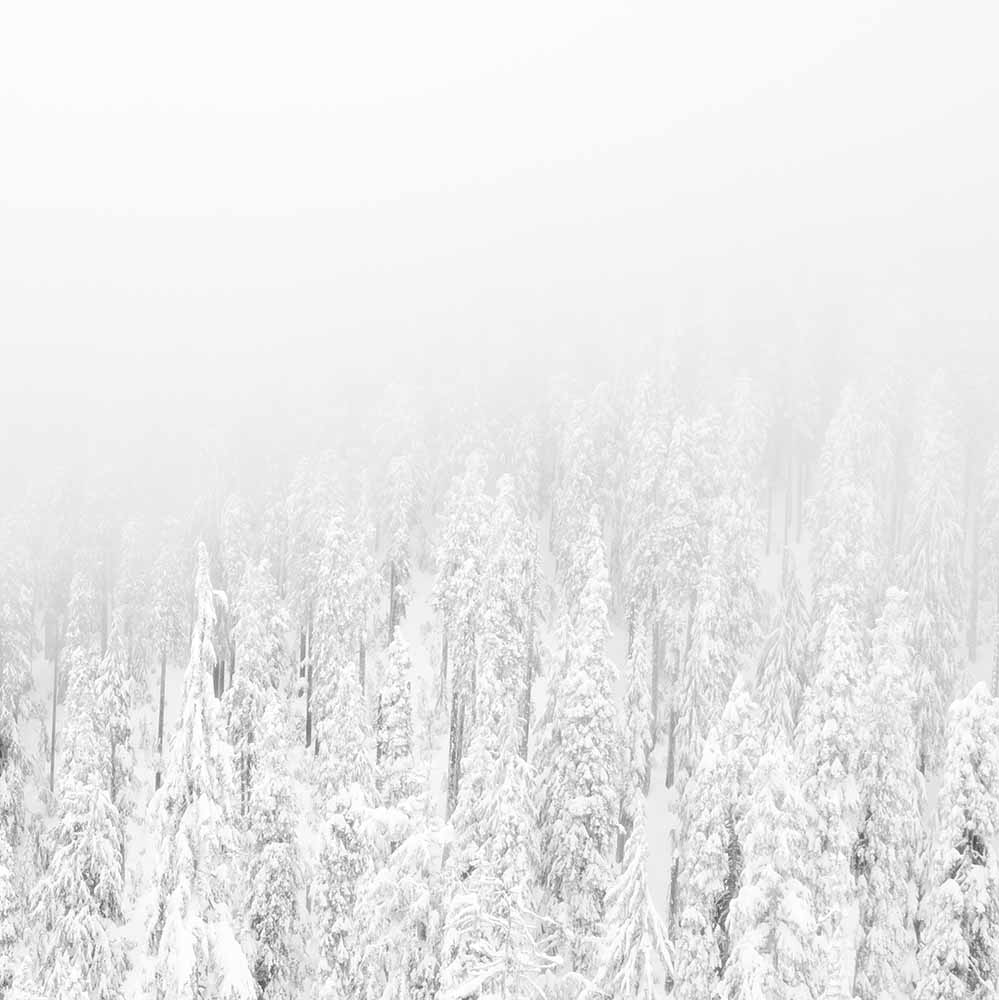 White snowy forest fine art photography