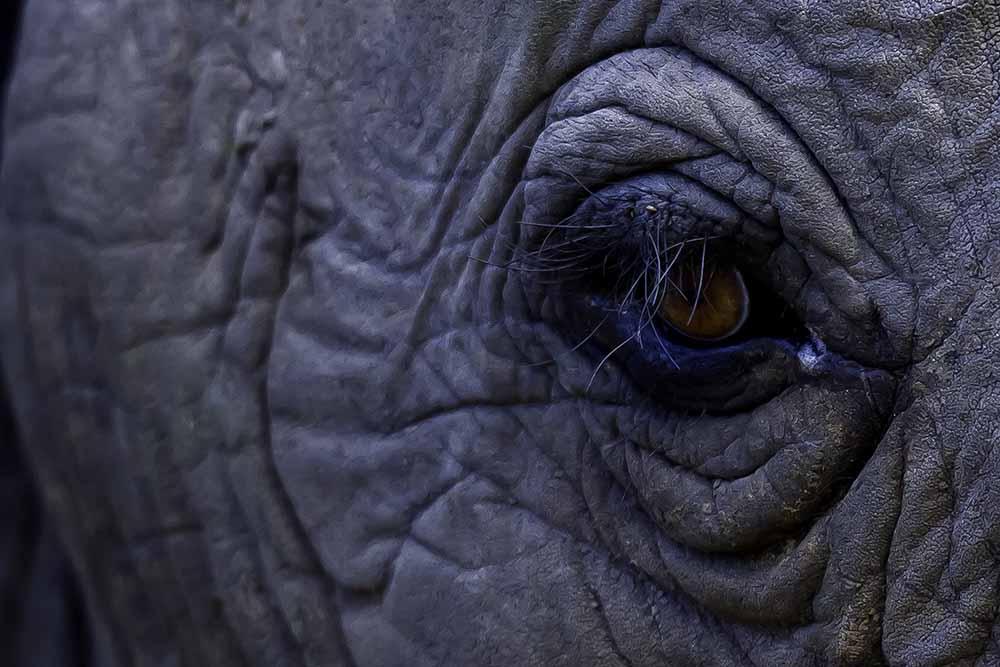 Bull elephant eye fine art photography