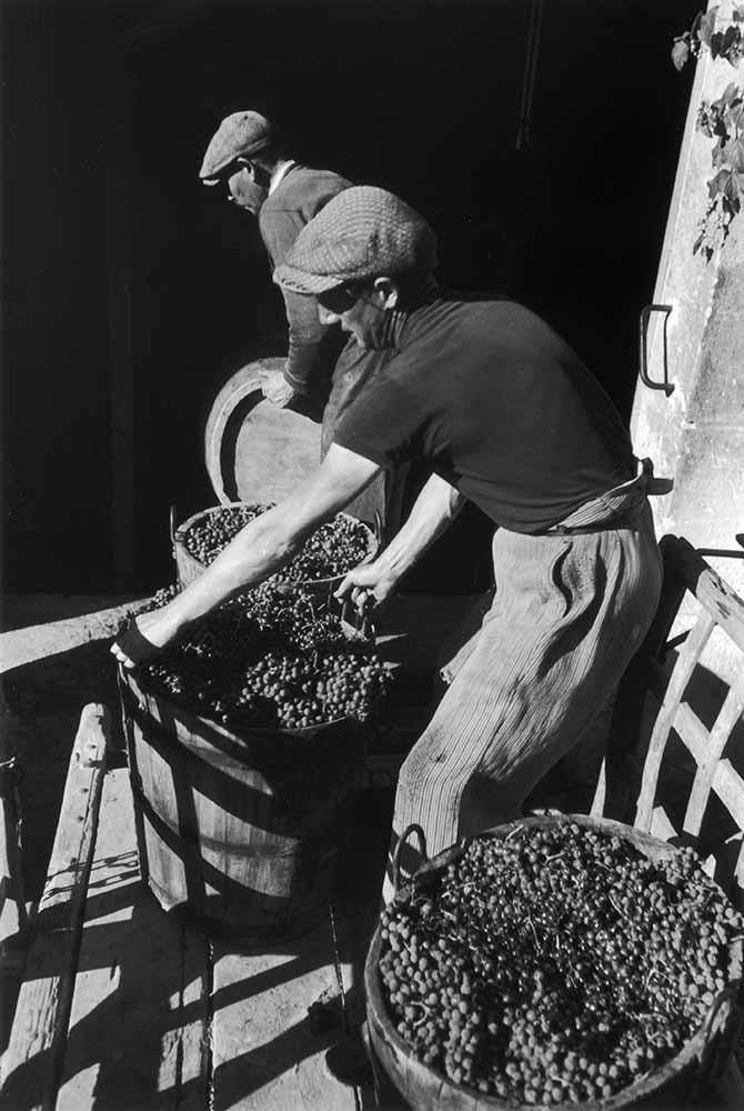 Bordeaux Harvest fine art photography