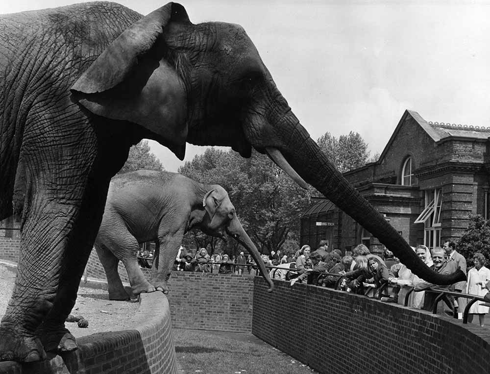Trunk Stretching fine art photography