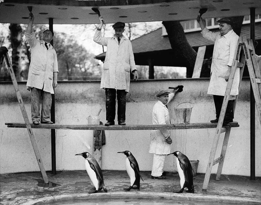 Penguins Decoration fine art photography