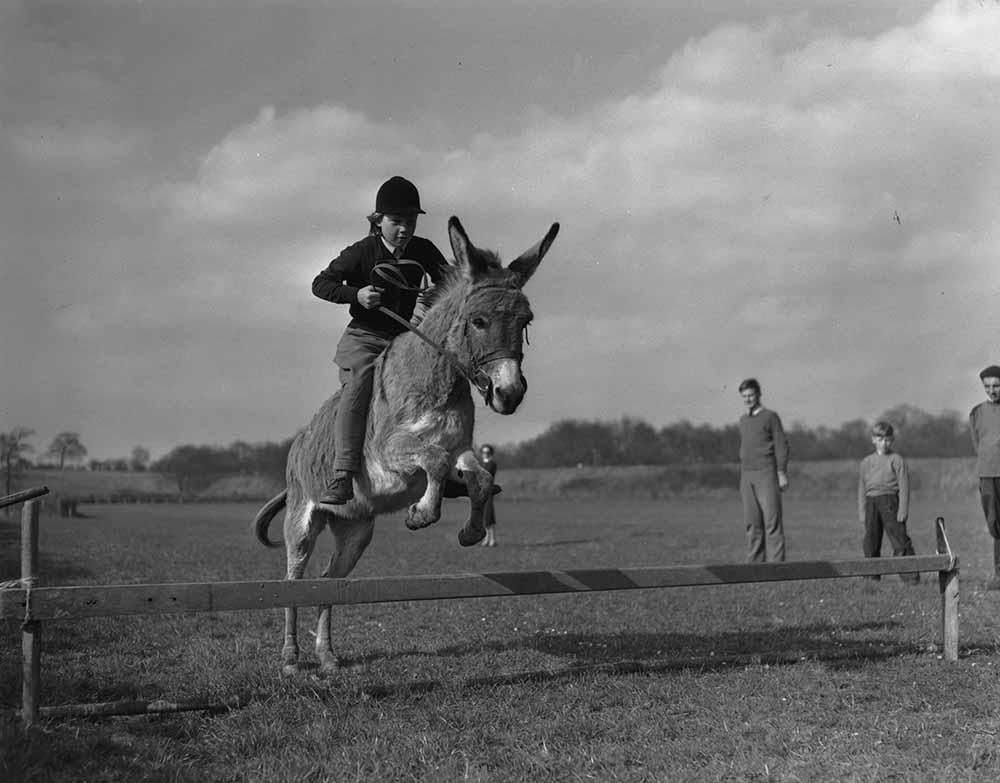 Jumping Donkey fine art photography