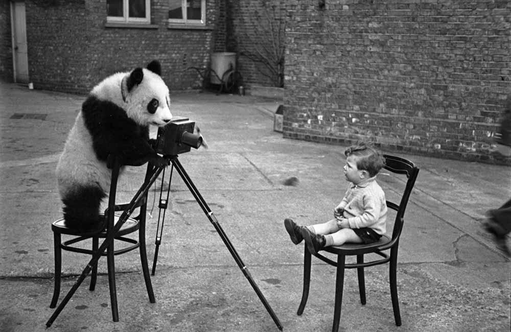 Panda Photo fine art photography