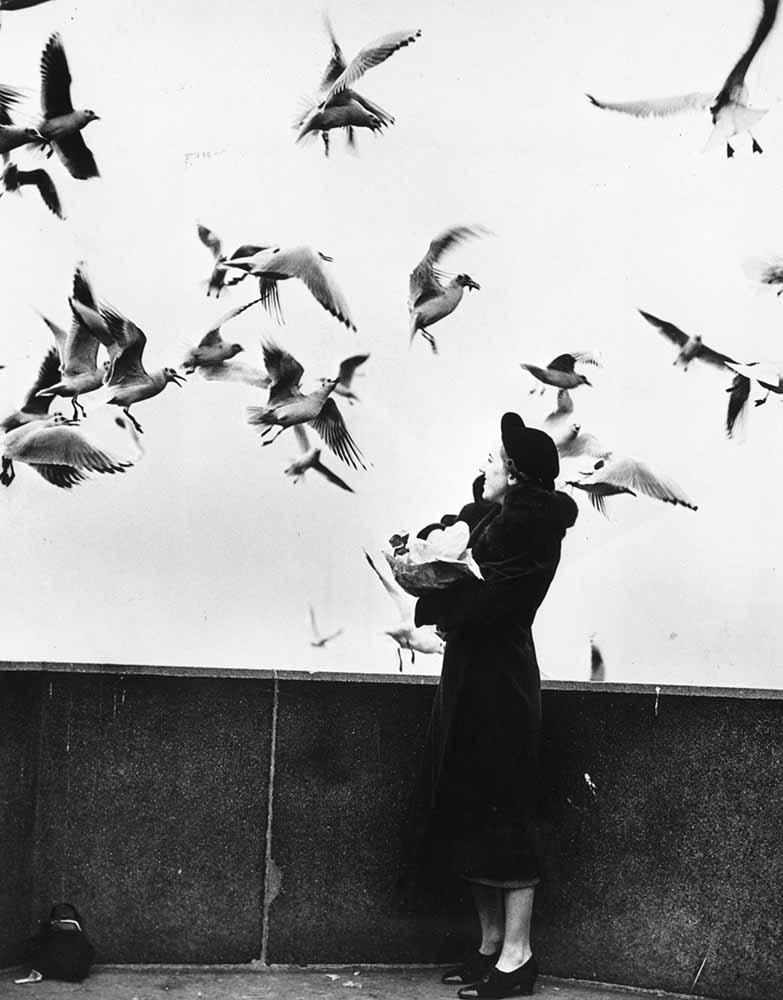 Thames Gulls fine art photography