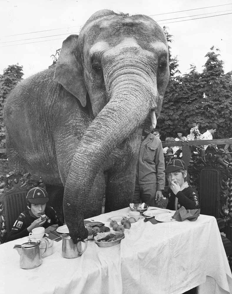 Elephant For Tea fine art photography