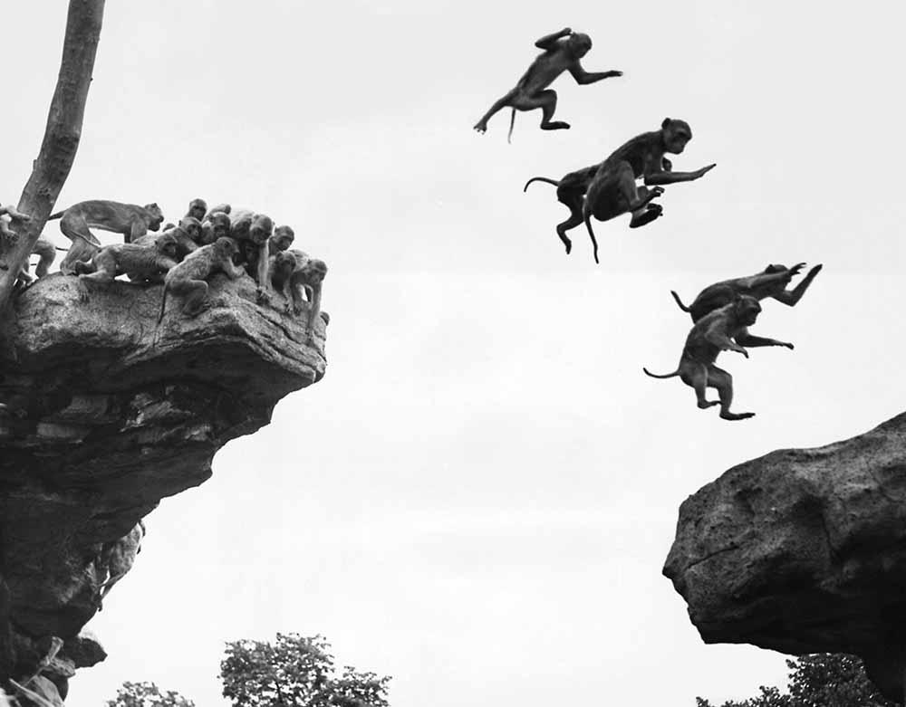 Flying Monkeys fine art photography
