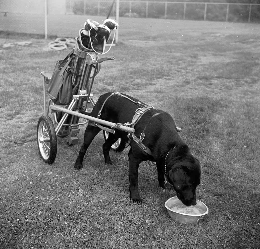 Canine Caddy fine art photography