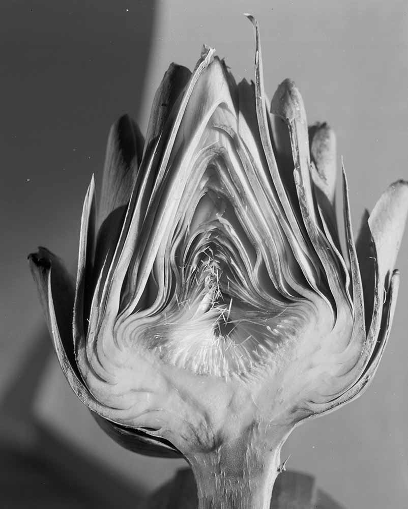 Artichoke fine art photography