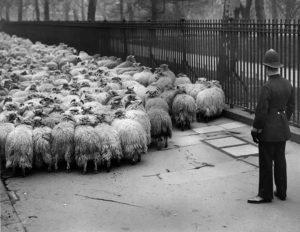 Law Is My Shepherd