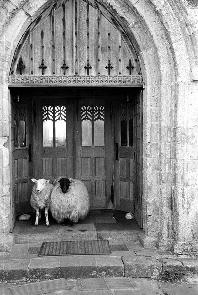 Church Sheep fine art photography