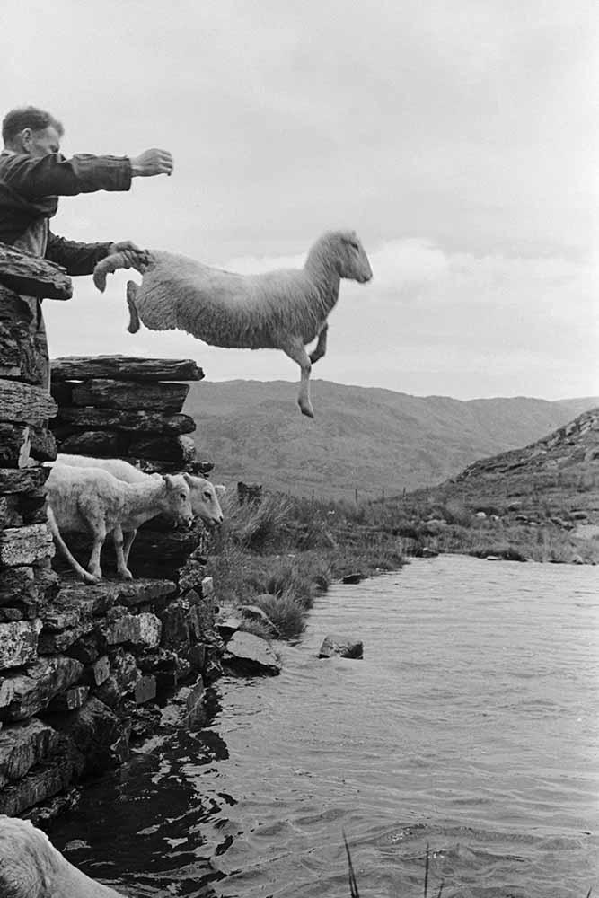 Sheep Dip fine art photography