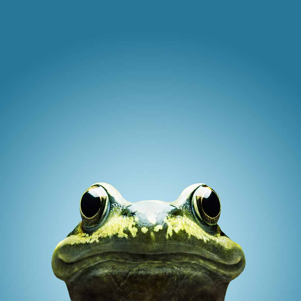 frog smile fine art photography