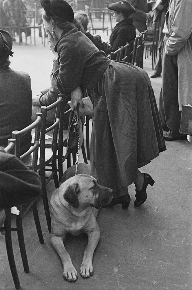 Dog And Owner At Crufts fine art photography