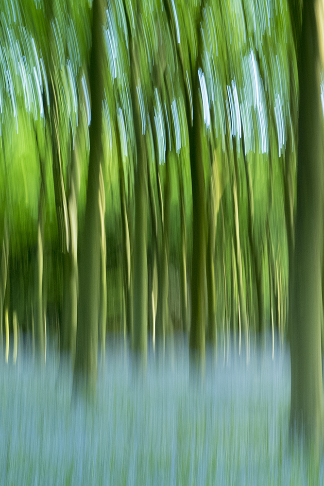 Bluebell Wood, The Cotswolds, UK fine art photography