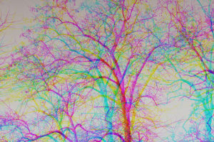 multicoloured effect with bare trees in winter – natural abstract background