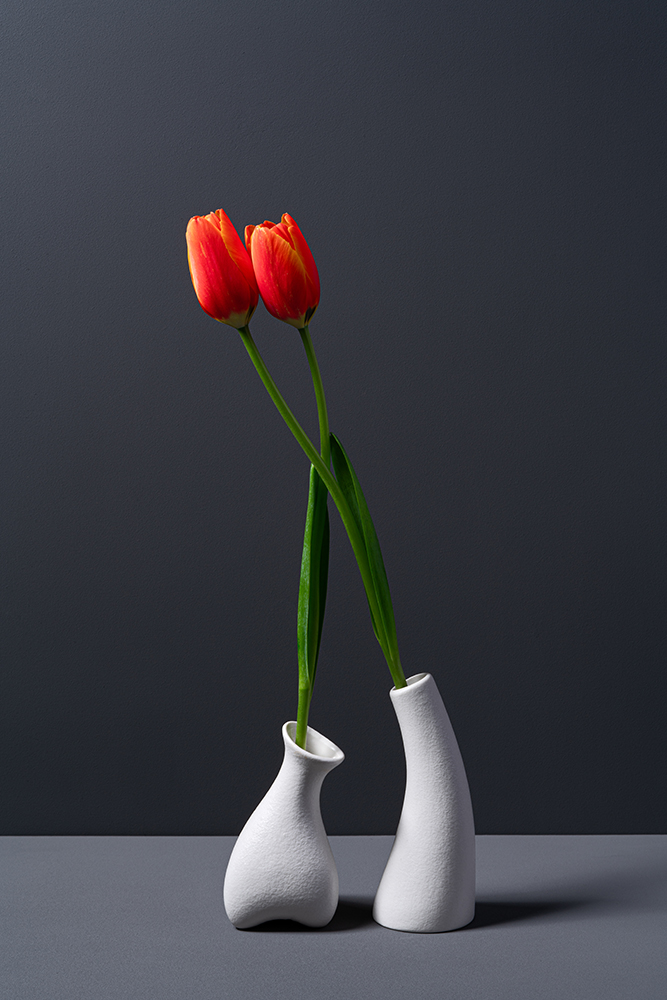Embracing Red Tulip in White Vase fine art photography