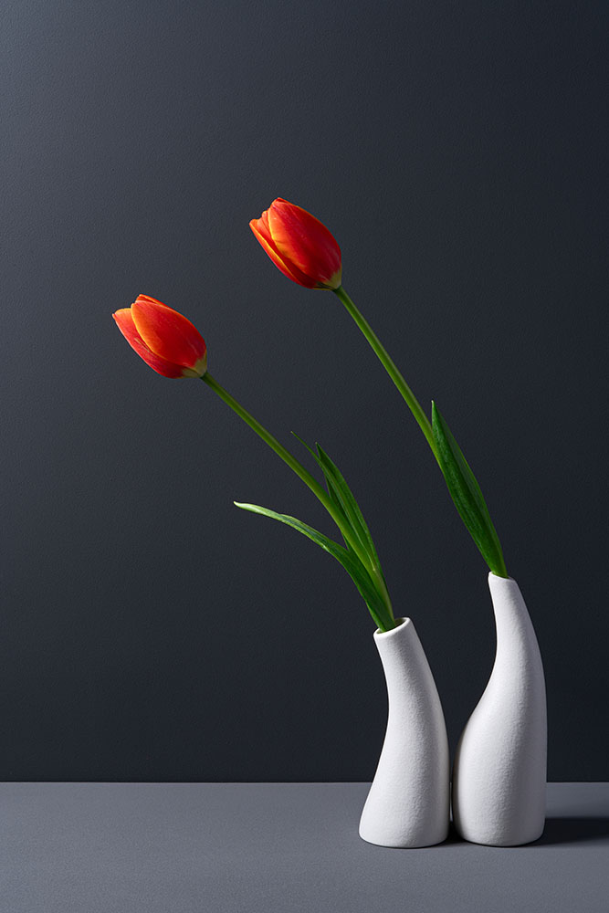 Bowing Red Tulip in White Curve Vase fine art photography