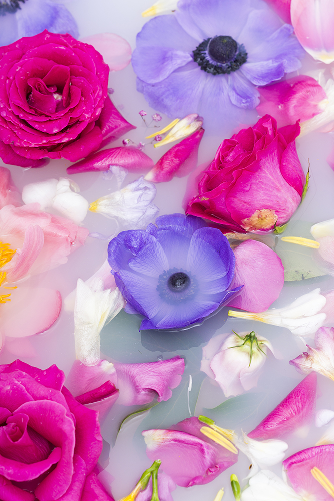 Close up background of fresh summer flowers fine art photography