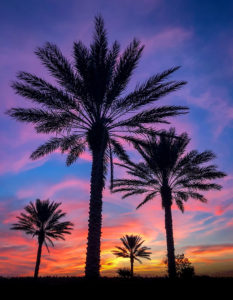 Colorful dramatic sunset with palm trees