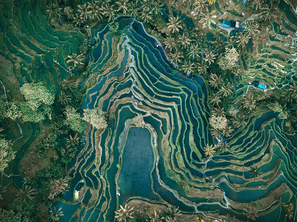 Aerial view of rice terraces fine art photography