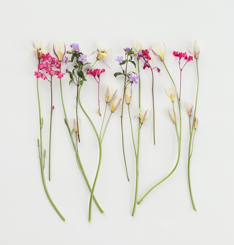 Flower, composition flatlay fine art photography